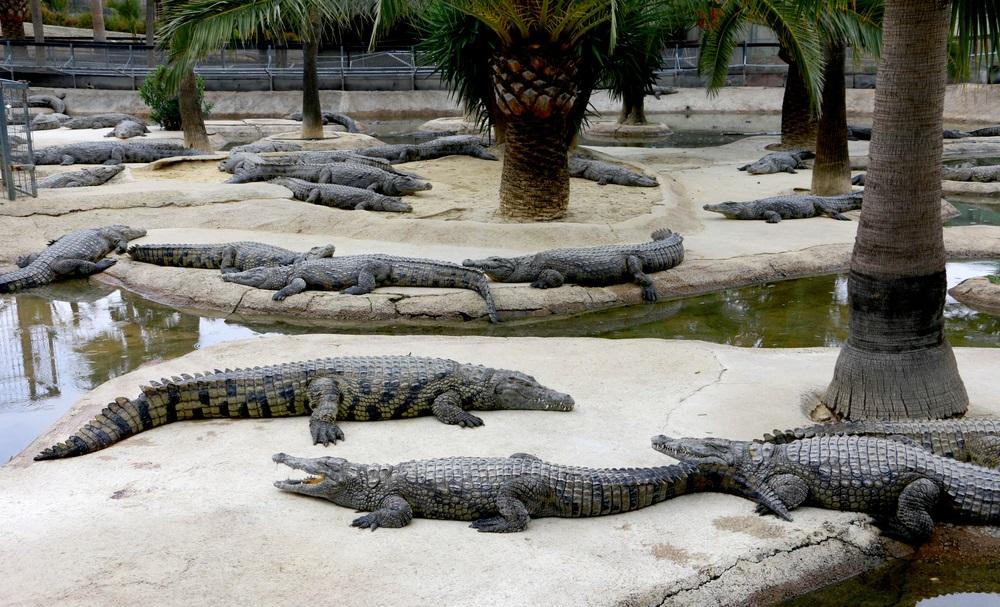 Krokodillen in het Crocodile Park in Torremolinos, Spanje.