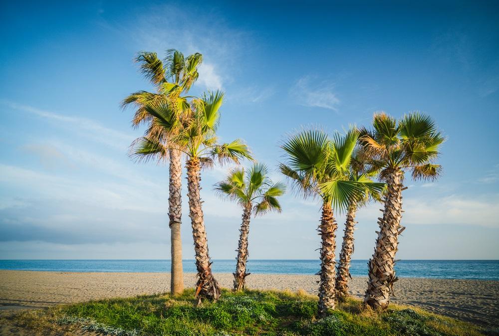 Palmbomen op het strand van La Cala de Mijas. Andalusië. Spanje.