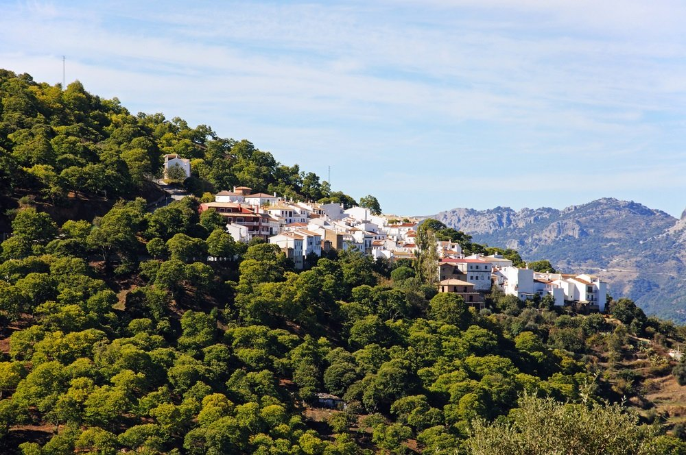 Wit dorp omgeven door een bos van kastanjebomen, Pujerra, Serrania de Ronda, provincie Malaga, Andalusië, Spanje, West-Europa.