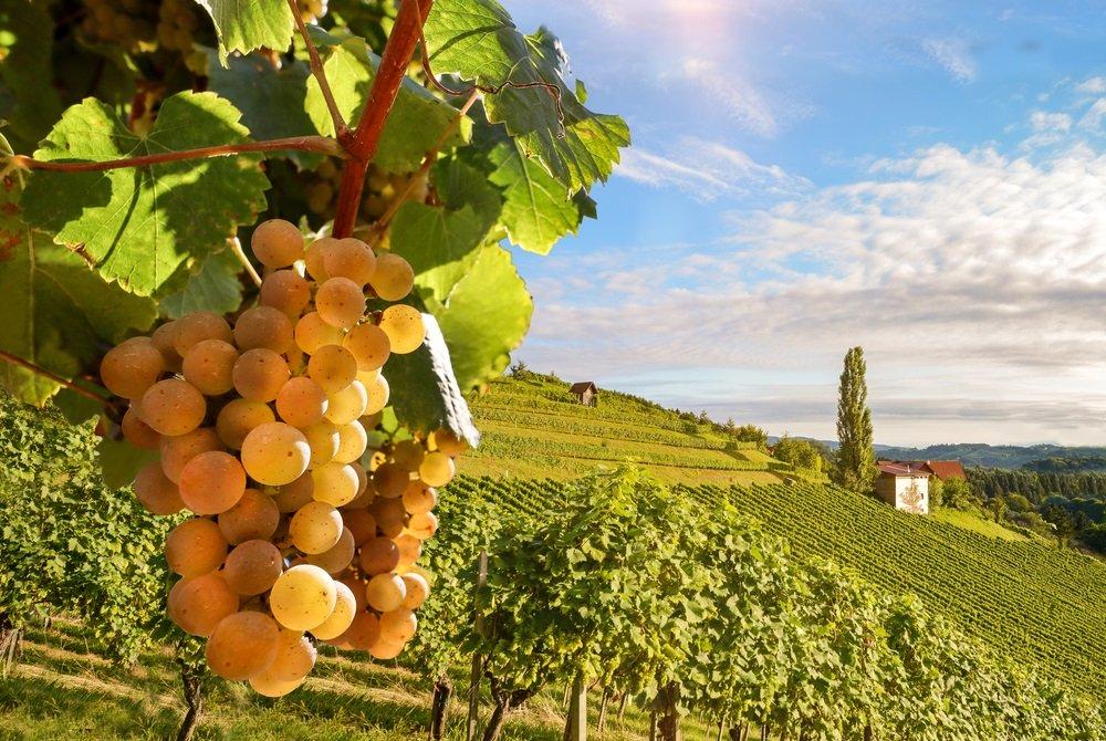 Wijngaard in de omliggende bergen van Competa, Andalusië, Spanje.