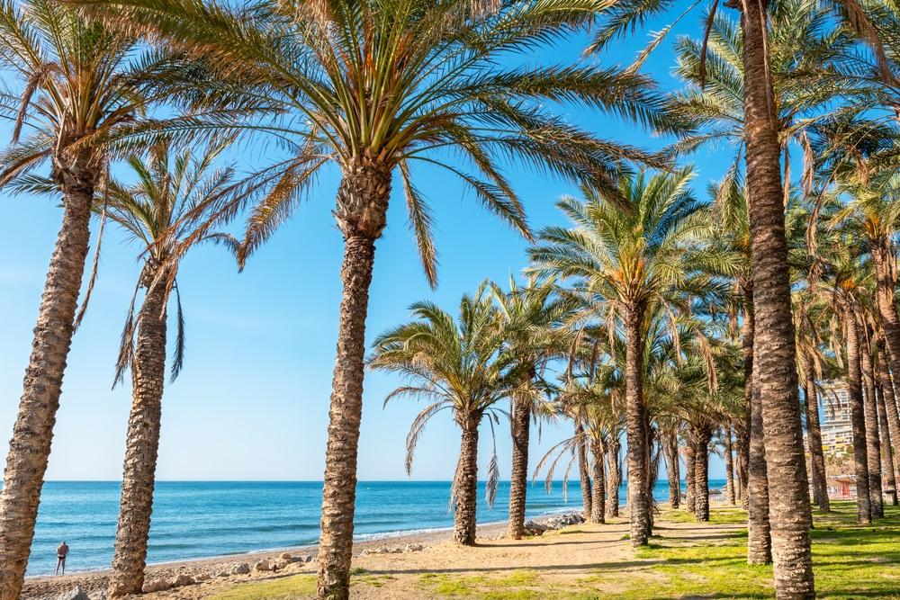 Palmbos langs een strand in Torremolinos. Costa del Sol, Andalusië, Spanje.